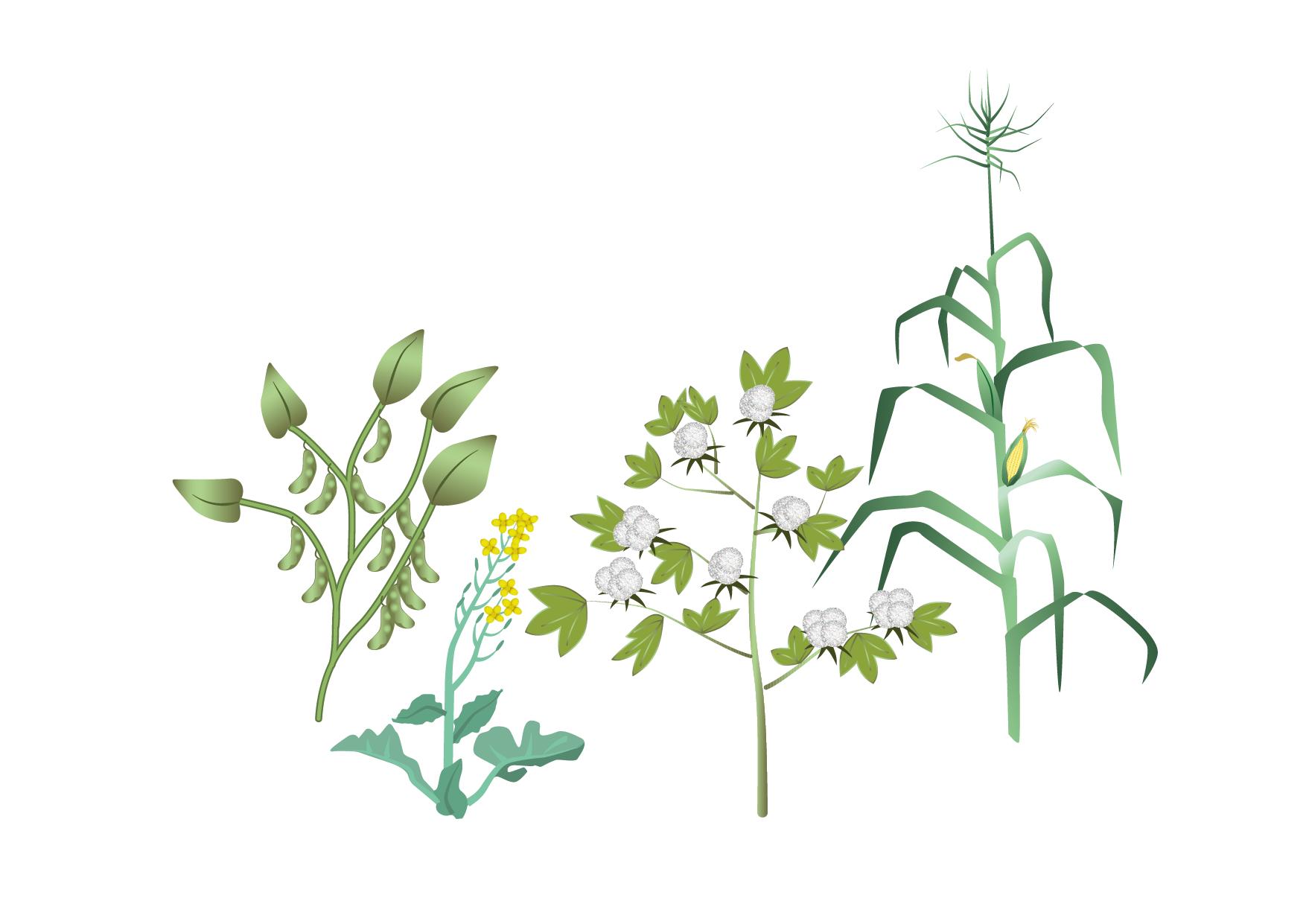Illustration av Sojaböna, raps, bomull och majs