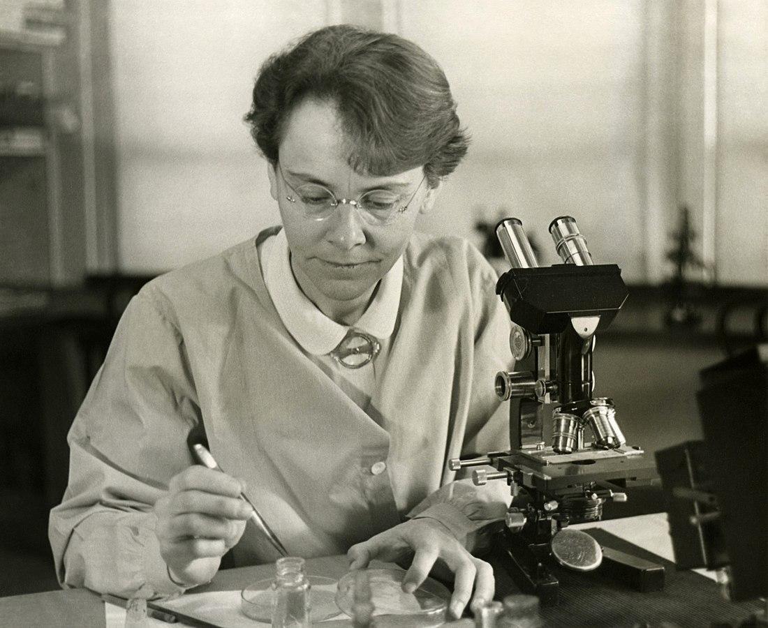 Foto av Barbara McClintock, 1902-1992, i hennes laboratoium.