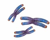 Bild av kromosomer.