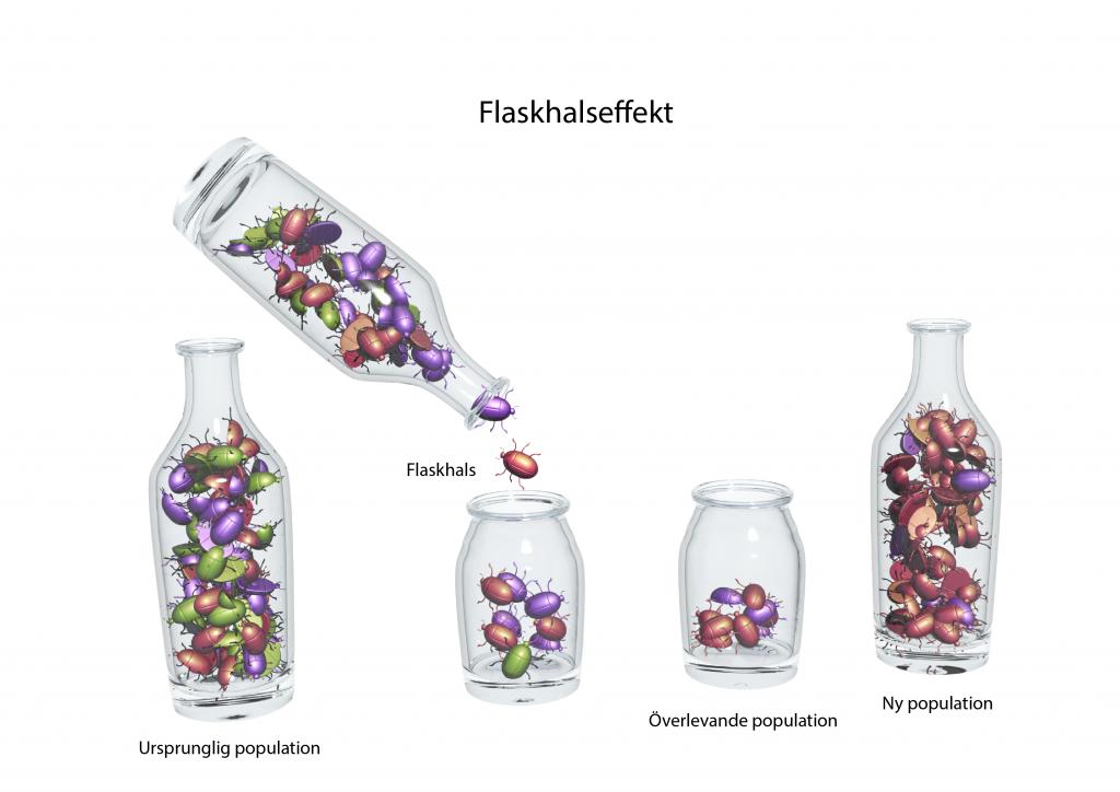 Illustration av en flaskhalseffekt.