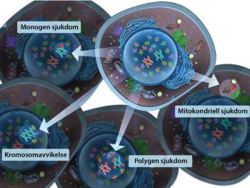 Illustration av monogena, polygena, mitokontriella sjukdomar och kromosomavvilkelser