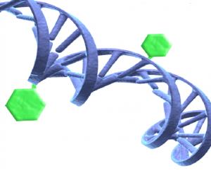 Illustration av en DNA-spiral och metylgrupper som fäst till DNA:t